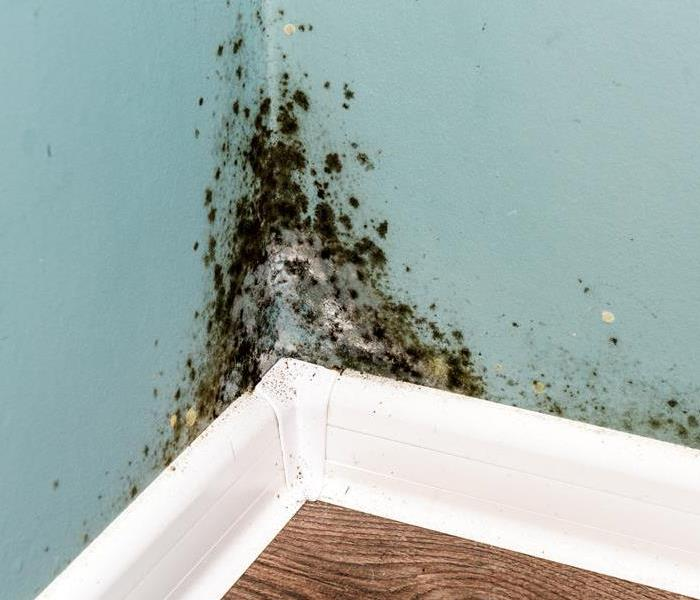 Why SERVPRO How SERVPRO Removes Mold From You Lakewood Home